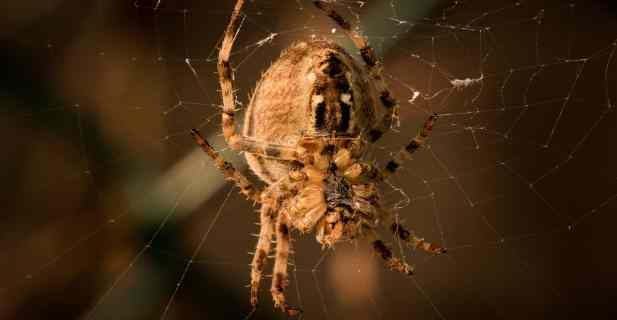 macro photography tips, macro spider.