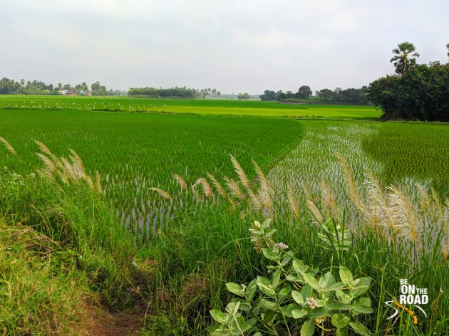 The colors of the Thamarabharani delta of Tamil Nadu