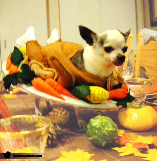 Cooked Turkey Dog Costume Photo 22