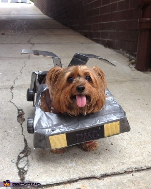 Delorean From Back To The Future Diy Costume For Dogs