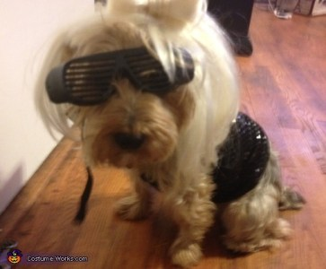 lady gaga dog costume halloween party costumes