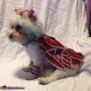 lady gaga meat dress dog s costume diy costumes under 45