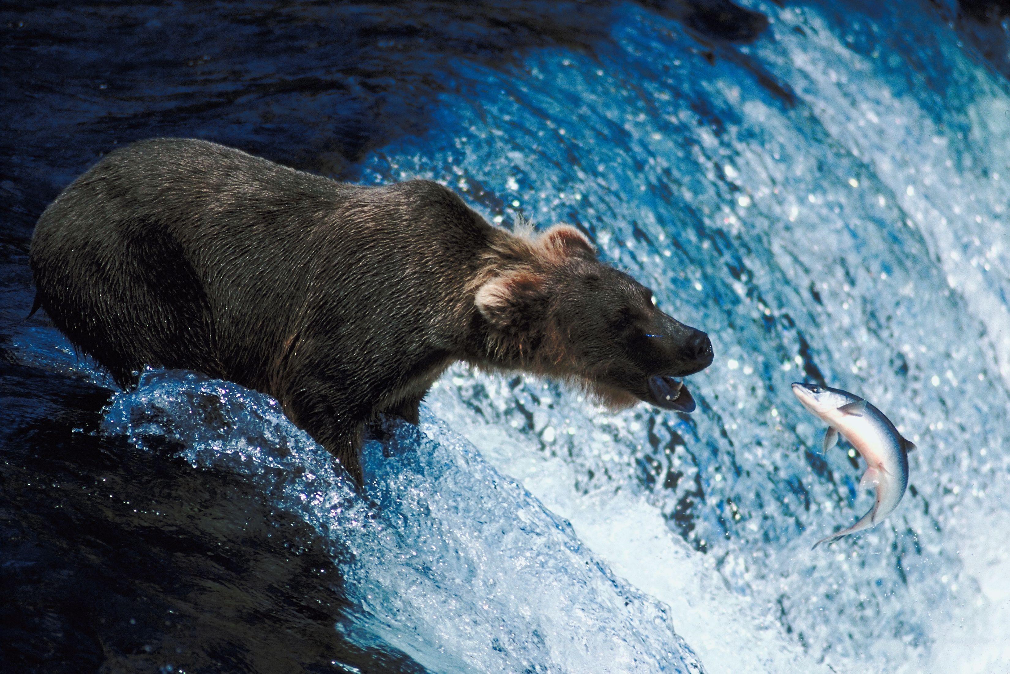 Biotic Factors In A Freshwater Ecosystem