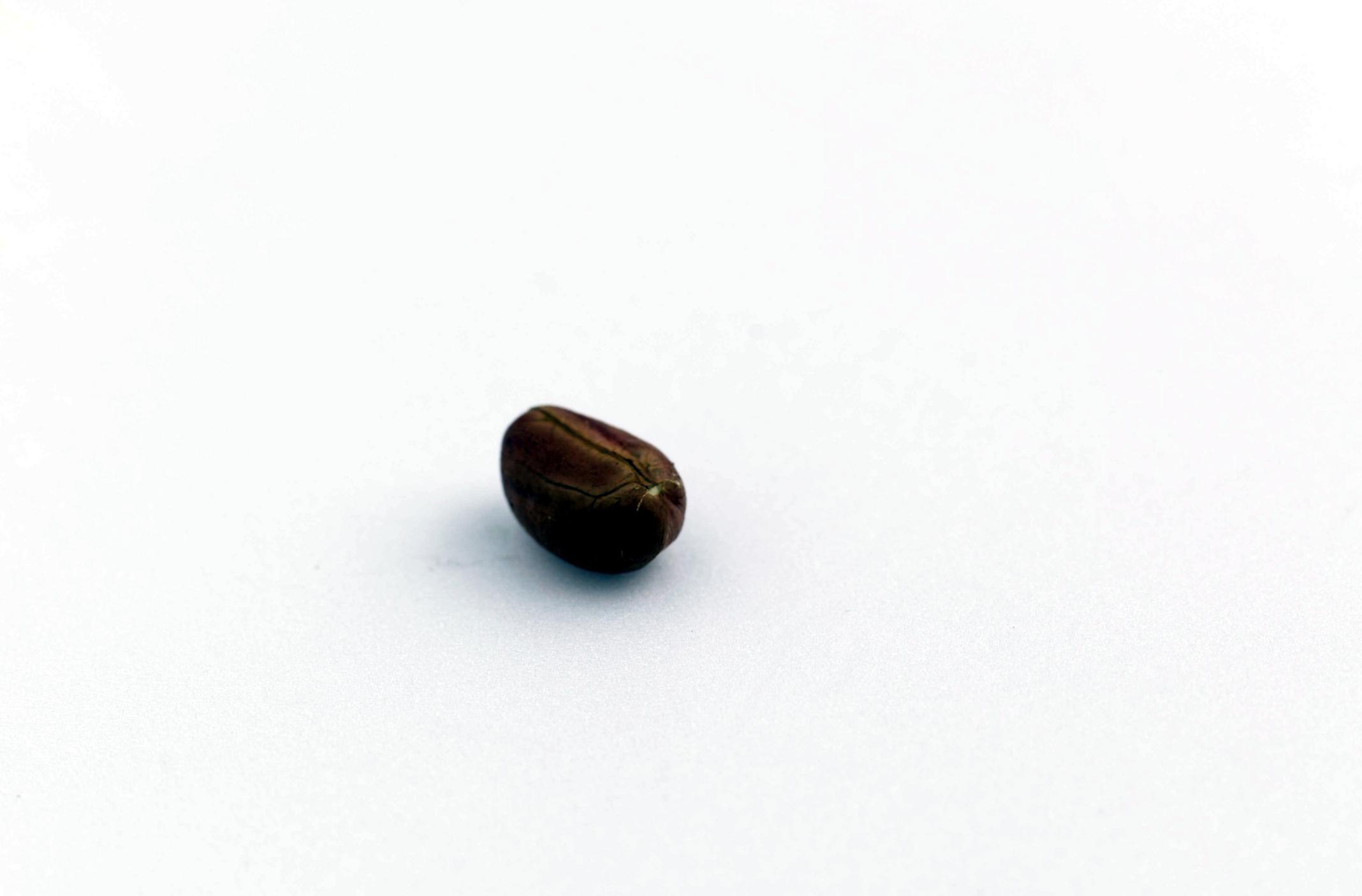 Three Main Parts Of A Seed