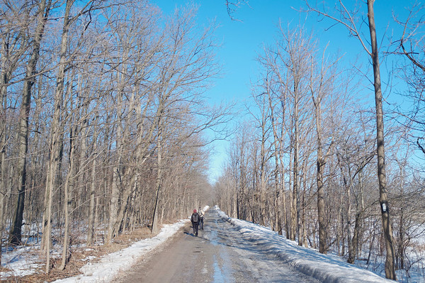 Dirt road section of the Bruce Trail