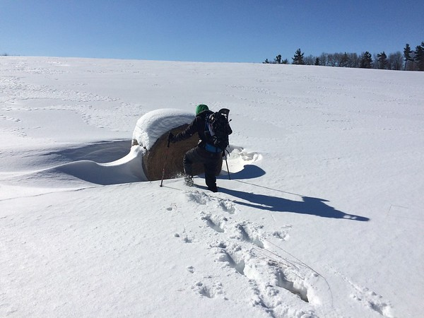My friends challenged me to walk off the firm packed-snow path and trudge towards a long-abandoned hay bale.