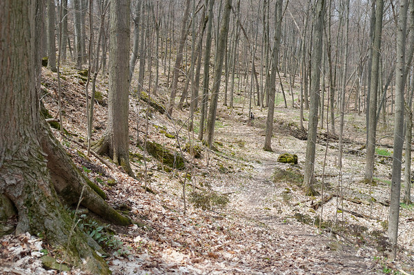 One of my favourite areas of this section of the hike.