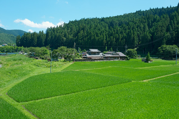 Rice fields on the way into the village of Chikatsuyu.