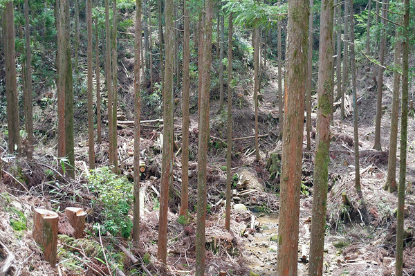 After stopping for lunch, there was another detour from the actual trail. This is the damage that a previous typhoon had done to the real trail. Pretty crazy.