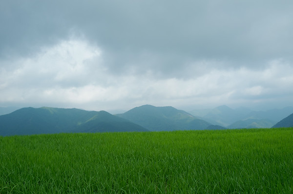 Passing by a lush field overlooking the mountains.