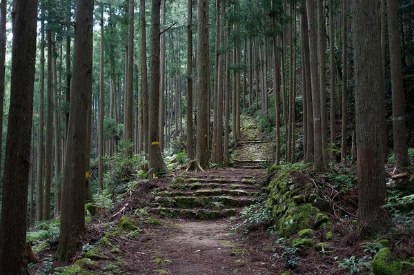 The Kumano Kodo climb from the town of Koguchi is tough but it is beautiful to look at.