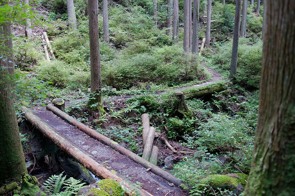 As I descend down this part of the trail, the surrounding landscape changes dramatically from typical alpine forest to an almost rain forest-like environment.