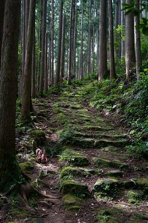 The steep climb up begins involving mossy rocks. A tad slippery.
