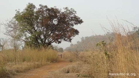 La piste devant le prieuré.. L'arbre a été, en partie, brûlé