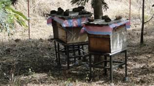 les trois ruches du prieuré