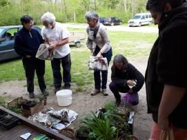 échange de plants avant de repartir...