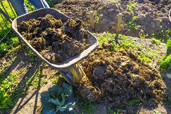 Fertiliser c'est améliorer le sol