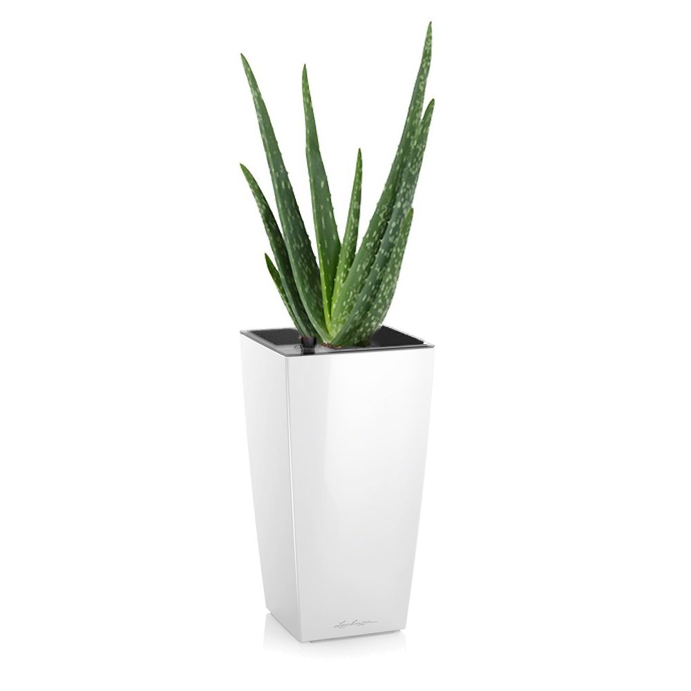 aloe vera en pot blanc lechuza h 35cm