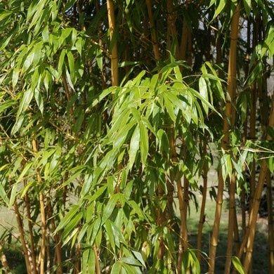 plantes de haie gamm vert
