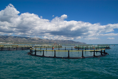 Aquaculture at Manfredonia
