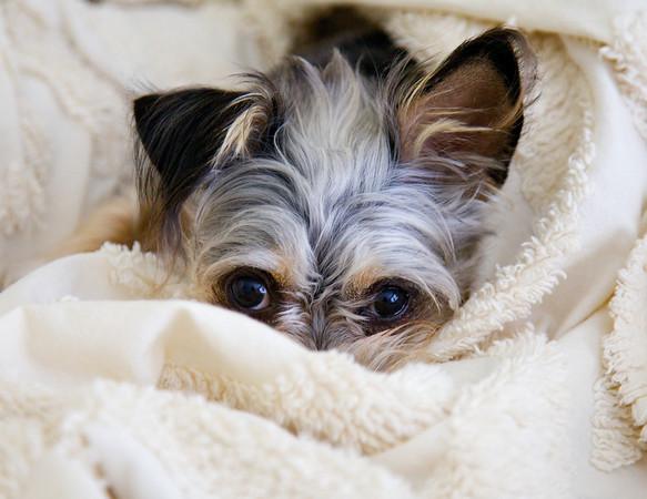 Sleppy Puppy