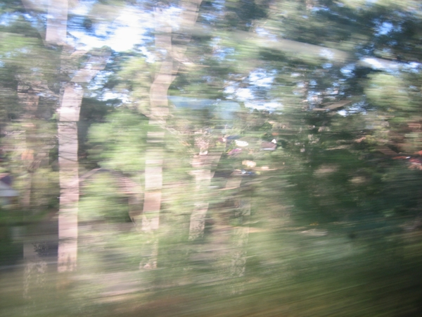 In Train View