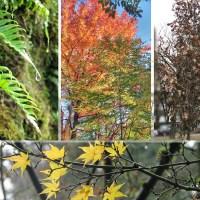Leaves - All Seasons