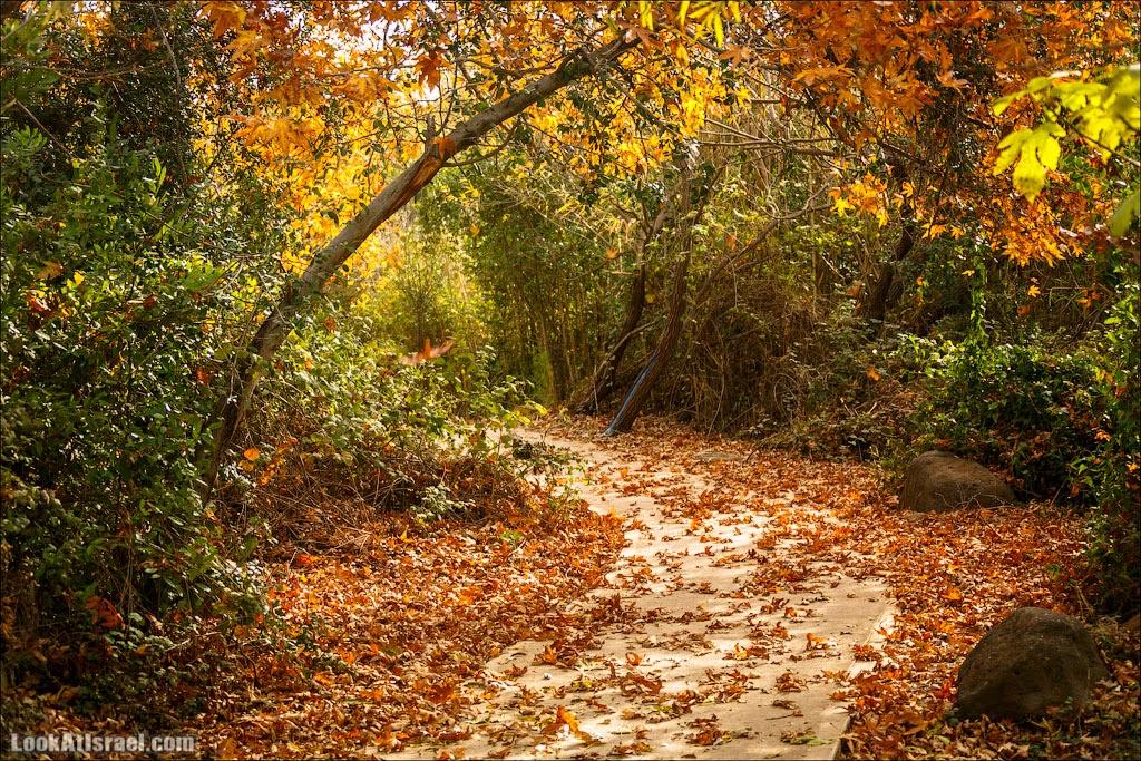 Осень в заповеднике Тель-Дан