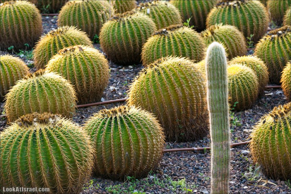 Сад Кактусов, Сад Камней, Тропический сад в парке а-Яркон | LookAtIsrael.com - Фото путешествия по Израилю