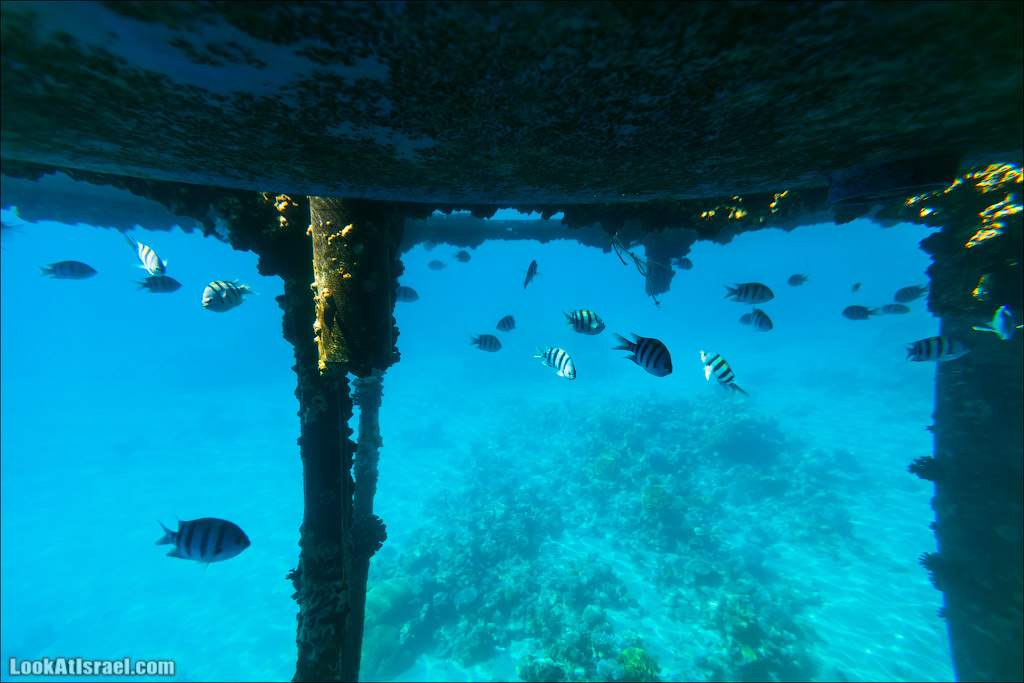 Эйлат - подводная обсерватория Океанаирум | LookAtIsrael.com - Фото путешествия по Израилю
