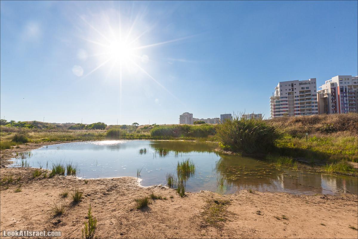 Озеро в Тель Авиве | LookAtIsrael.com - Фото путешествия по Израилю
