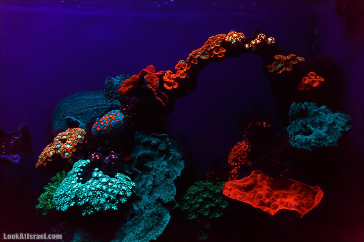 Подводная обсерватория Океанариум, Эйлат   LookAtIsrael.com - Фото путешествия по Израилю