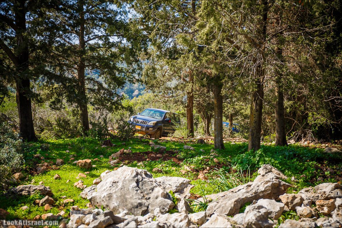 Зимнее путешествие на джипах по полям и лесам горы Кармель   LookAtIsrael.com - Фото путешествия по Израилю