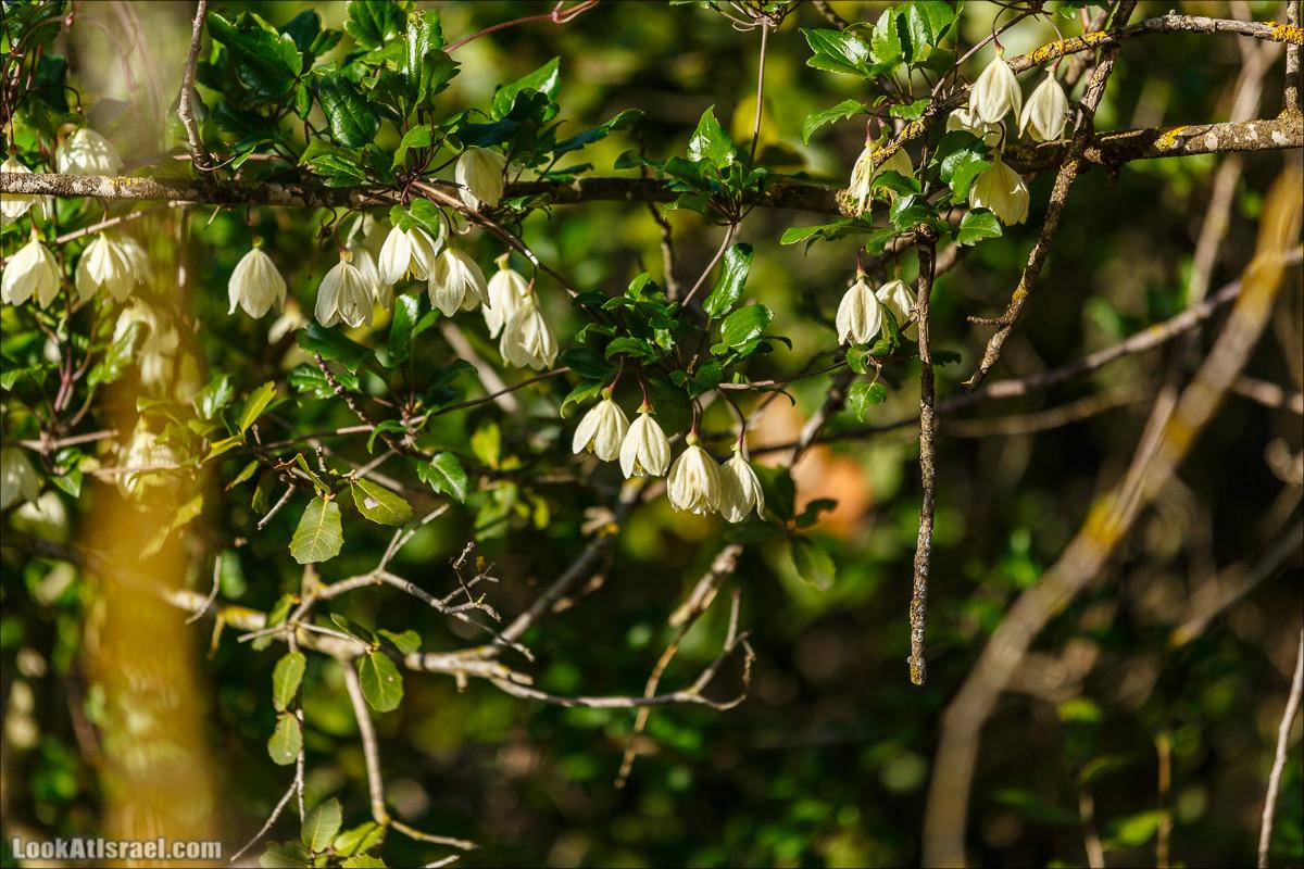 Цветение в Израиле. Самое яркое время года - зима | LookAtIsrael.com - Фото путешествия по Израилю