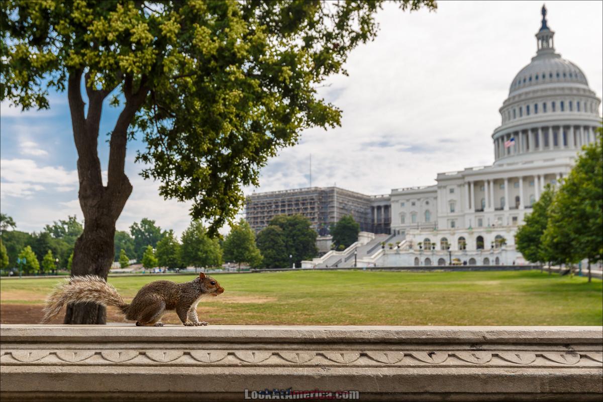 Путешествие по США   LookAtAmerica.com - Большое Американское путешествие LookAtIsrael.com