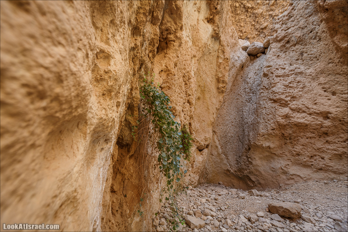 Ущелье Сальвадора | Wadi Salvadora | ואדי סלבדורה | LookAtIsrael.com - Фото путешествия по Израилю