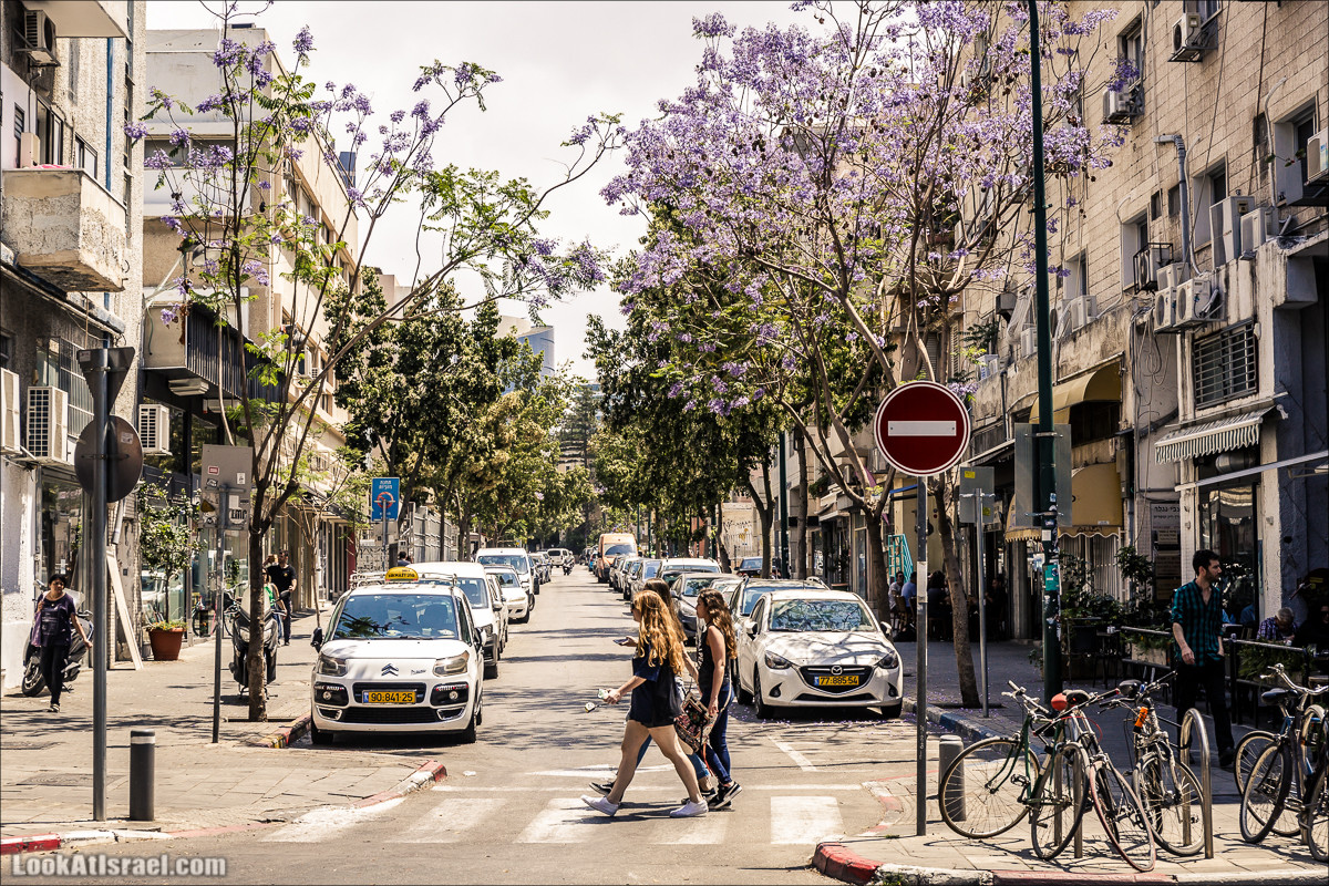 Крошки Тель-Авива - случайные фотографии из жизни Тель-Авива | LookAtIsrael.com - Фото путешествия по Израилю