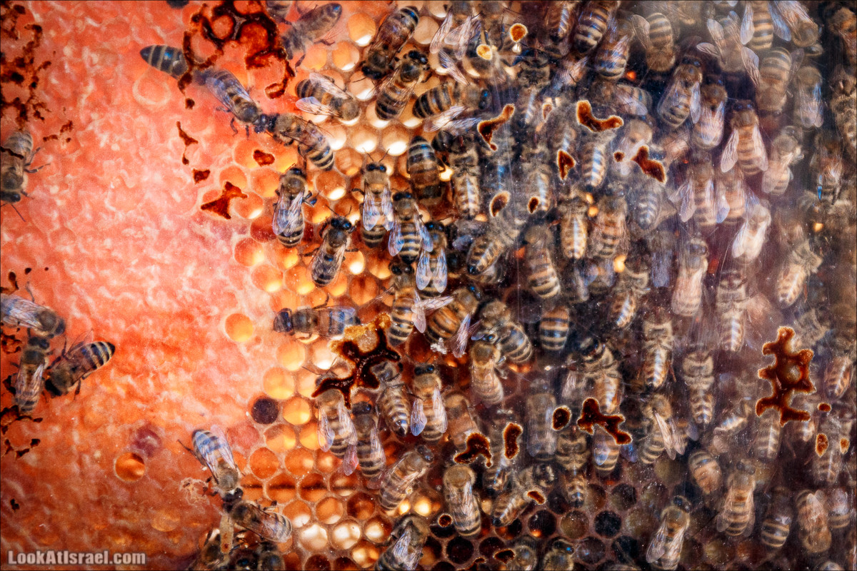 Дом мёда в Кадеш Барнеа | House of the Honey in Kadesh Barnea | בית הדבש בקדש ברנע | LookAtIsrael.com - Фото путешествия по Израилю