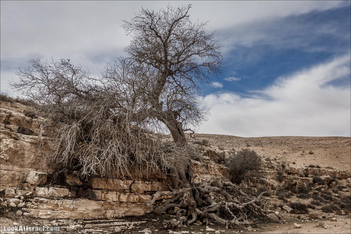 Пеший маршрут по ручью Элот, вершина Элот, водоёмы Лоц | LookAtIsrael.com - Фото путешествия по Израилю