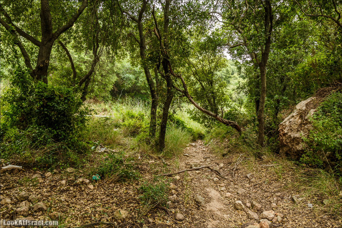 Ручей Орен и пещера Эцба   LookAtIsrael.com - Фото путешествия по Израилю