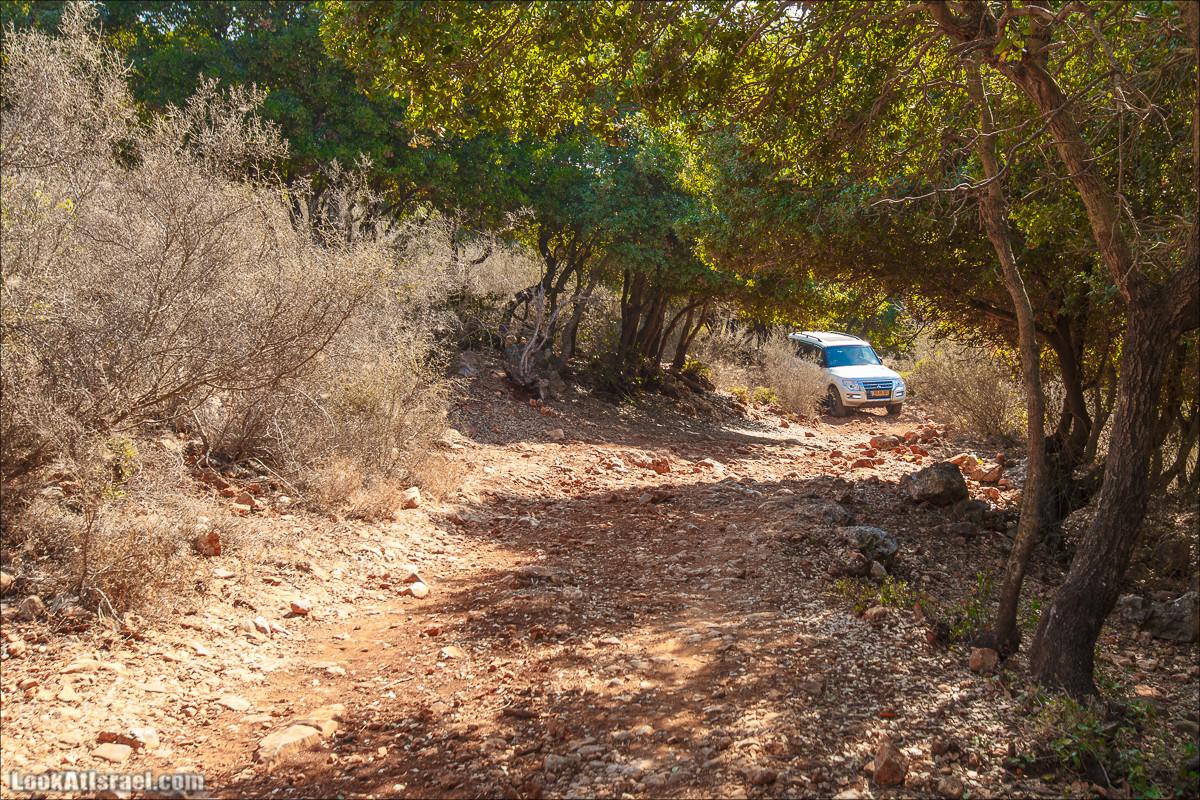 Классика Западной Галилеи - Нахаль Гаатон, гора Адир и крепость Монфор   LookAtIsrael.com - Фото путешествия по Израилю