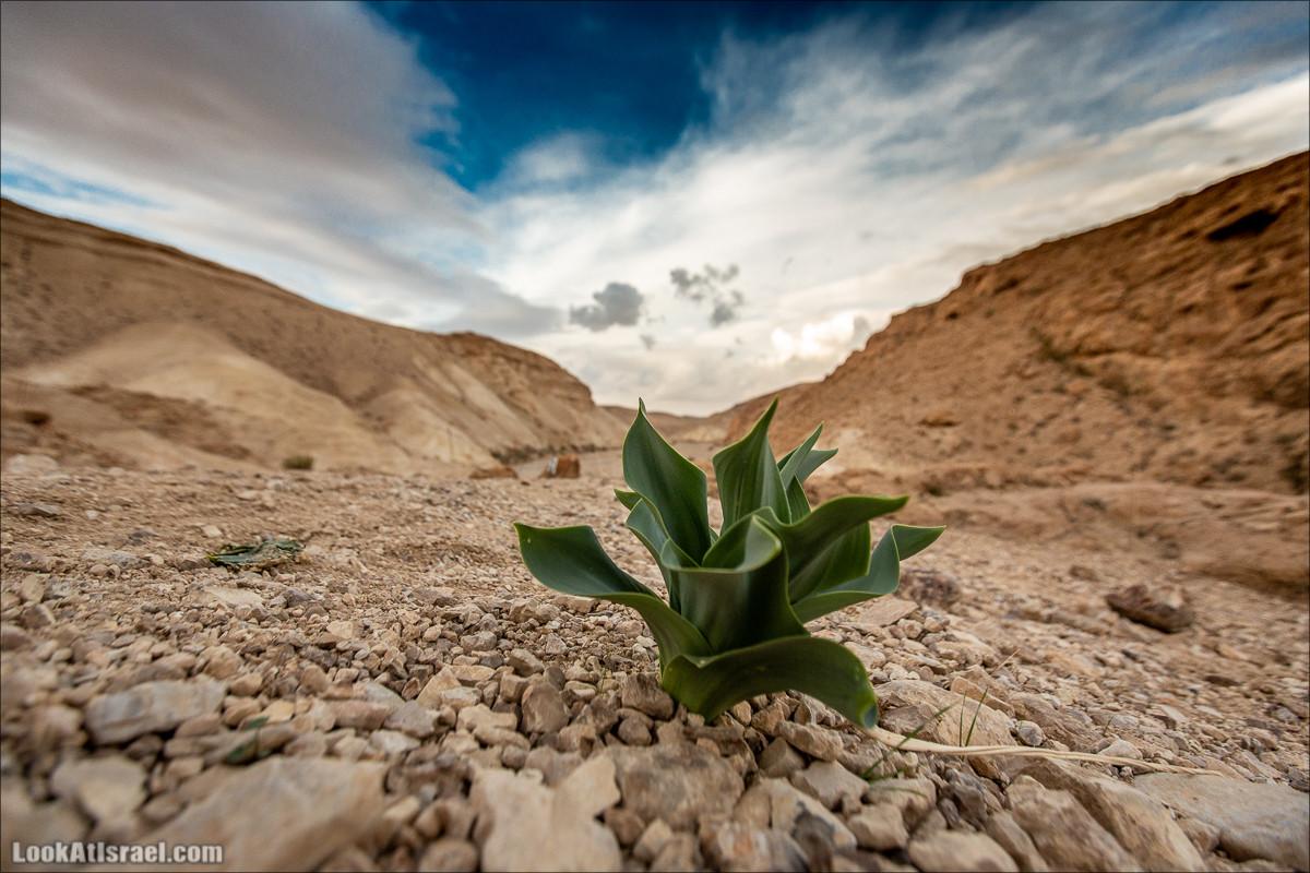 Путешествие на джипах по пустыне в поисках наводнений. Водопады Хевер, Шафан, Цафира | LookAtIsrael.com - Фото путешествия по Израилю
