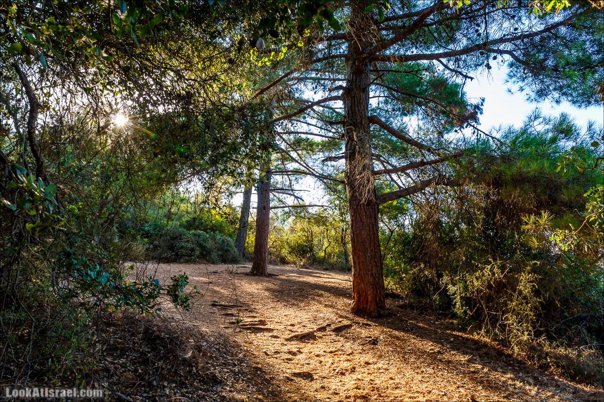 Утров в лесу на горе Мерон | LookAtIsrael.com - Фото путешествия по Израилю и не только...