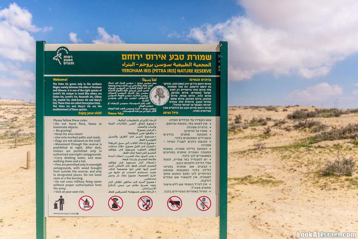 Ирис Йерухам   Yeruham Iris   אירוס ירוחם פטרה פטרנה   LookAtIsrael.com - Фото путешествия по Израилю