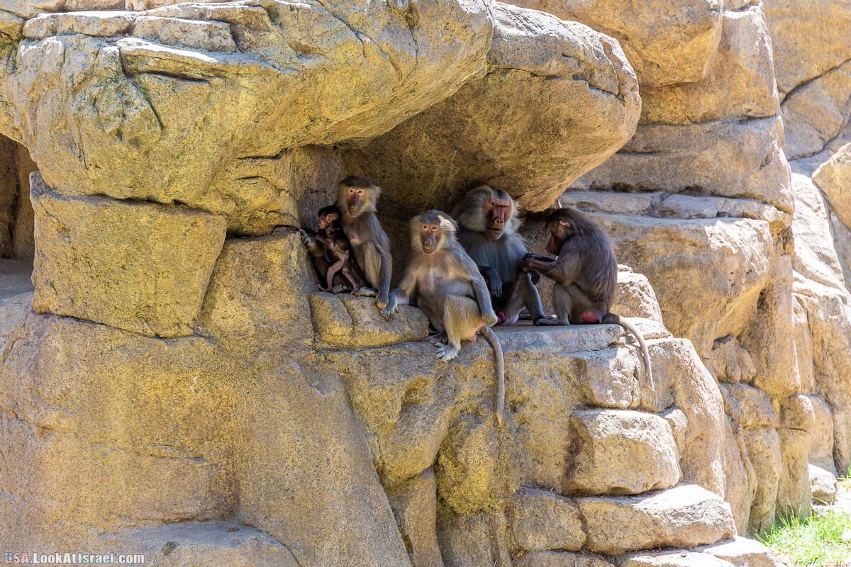 Зоопарк Сан Диего   LookAtIsrael.com - Фото путешествия по Израилю