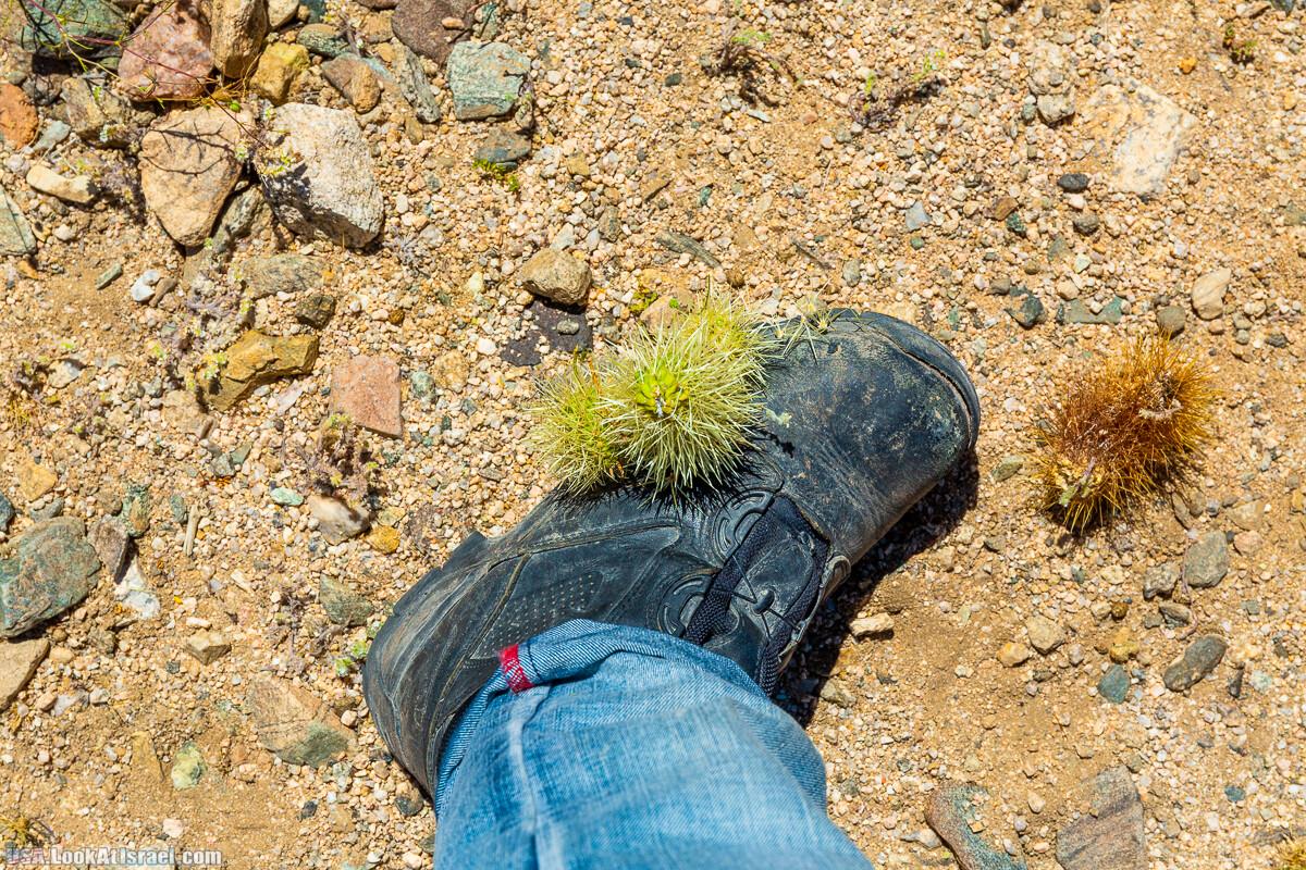 Национальный парк Джошуа Три | Joshua tree National Park | LookAtIsrael.com - Фото путешествия по Израилю
