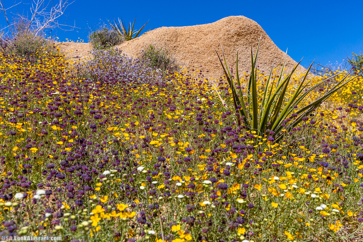 Национальный парк Джошуа Три   Joshua tree National Park   LookAtIsrael.com - Фото путешествия по Израилю