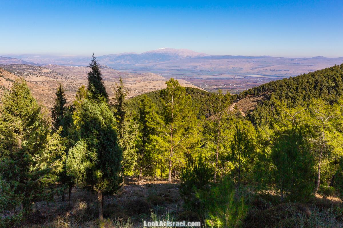 Чуть-чуть леса и гор