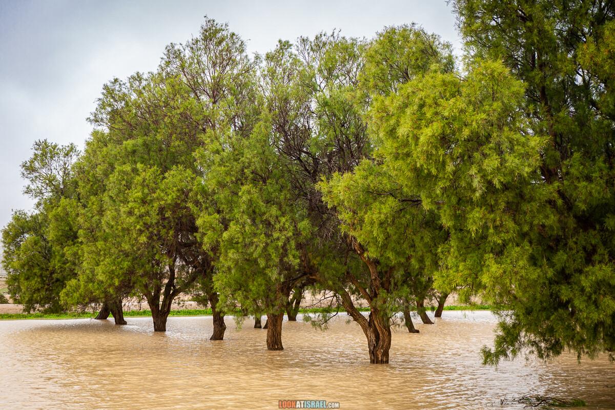 Наводнение ручья Цин | LookAtIsrael.com - Фото путешествия по Израилю