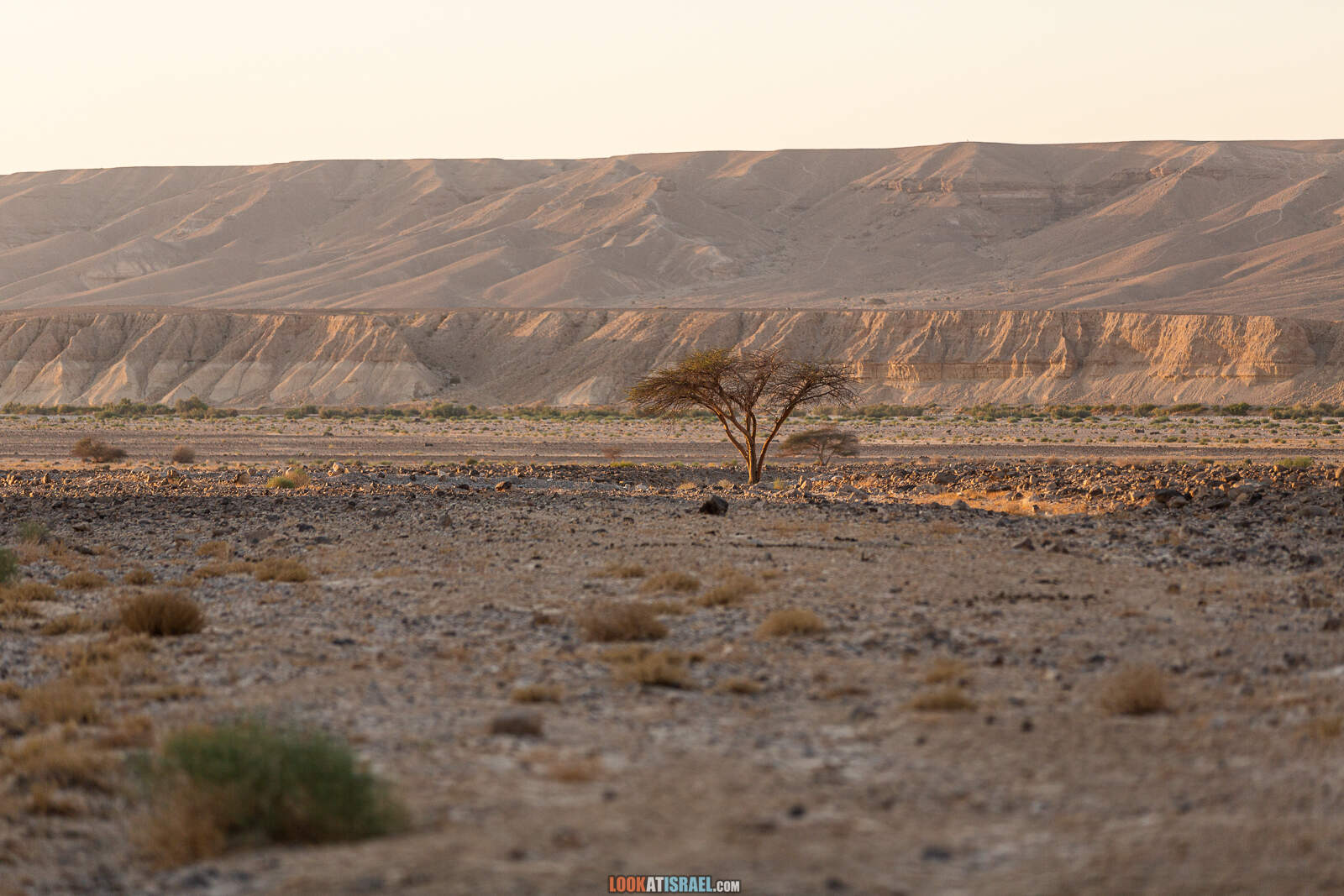 На внедорожнике вокруг махтеш Рамон, ручьи Афифон и Рамон
